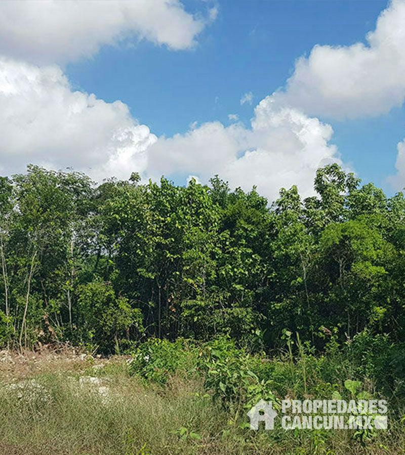 areas_verdes03_terreno_rio_cancun_mallorcani
